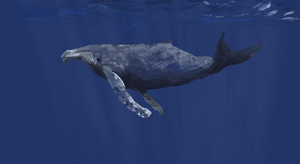 Whale study.